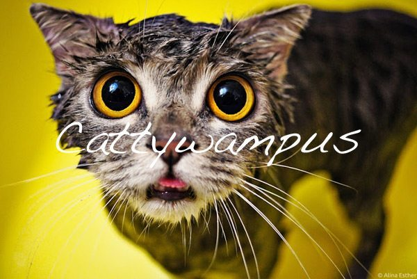Cattywampus [How To Write a Compelling Vision Statement]